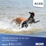 Las mejores playas para disfrutar del verano con tu perro