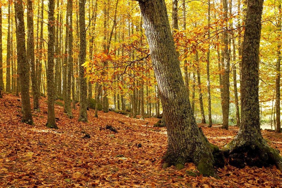 Resultado de imagen de otoño pinsapar