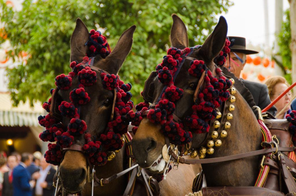 caballos feria de abril sevilla autor: Sandra Vallaure