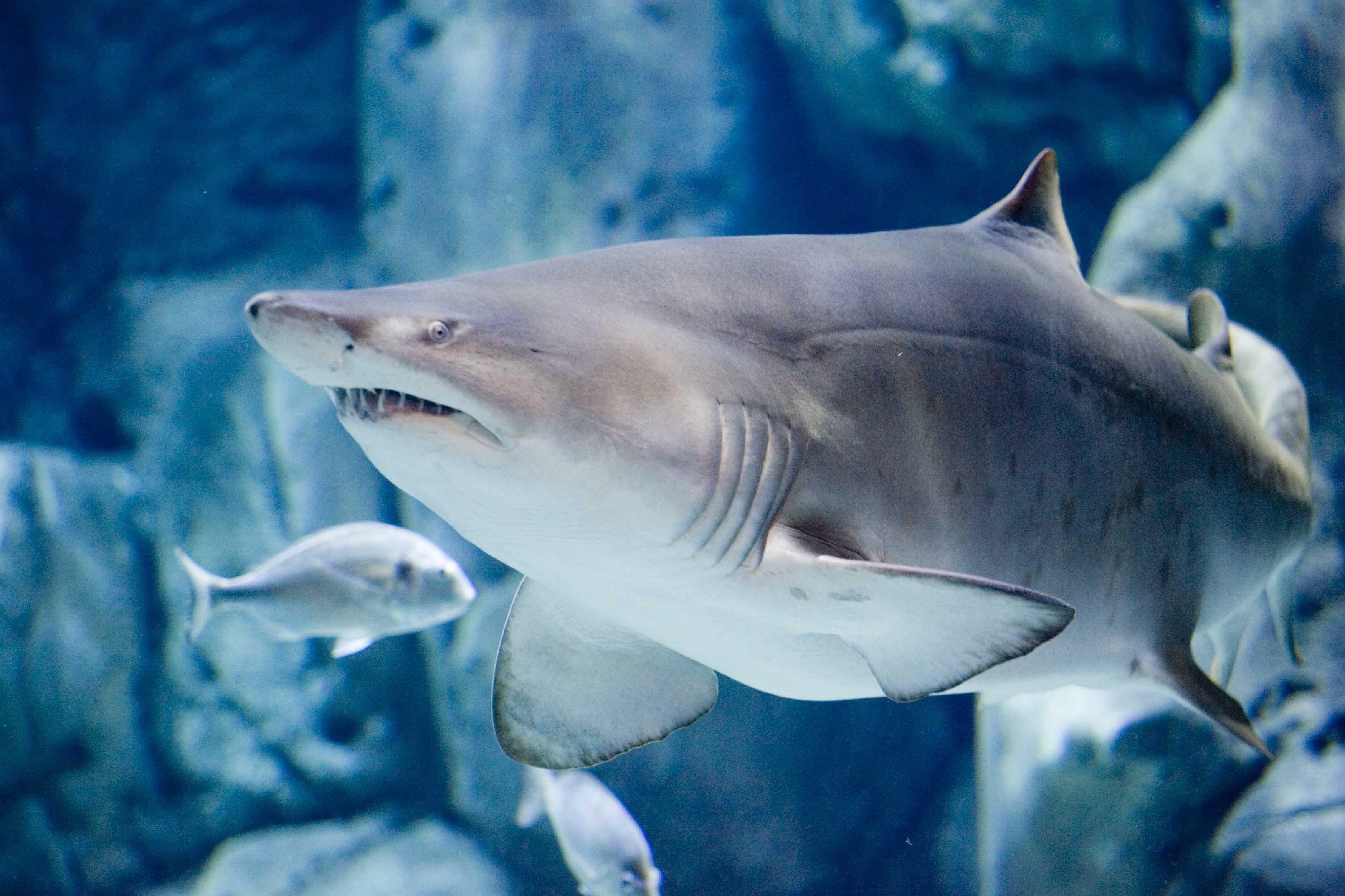 dia oceanos medioambiente reciclar alsa acuario gijon