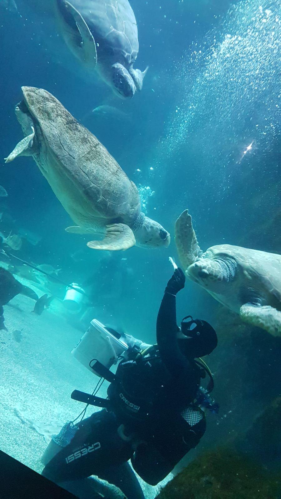 acuario gijon alsa tortuga viaje