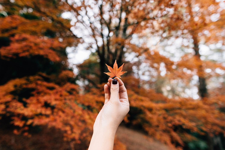 fotos otoño paisajes