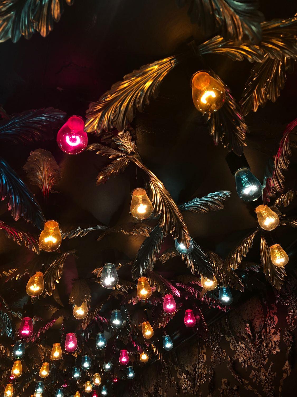 jardín botánico navidad