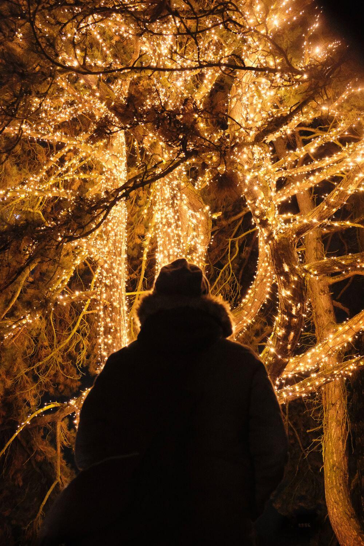christmas garden madrid alsa  2019